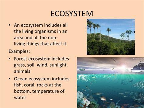 exle of ecosystem ecology levels of organization