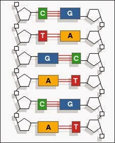 cadenas de adn y arn ejercicios profesora ciencia naturales y medio ambiente u1 adn y arn