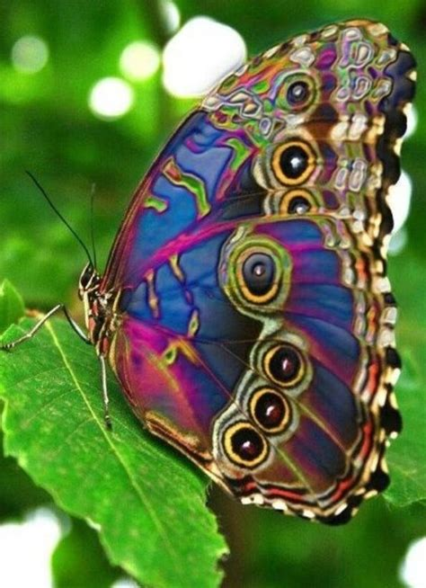 colorful butterfly colourful butterfly colourful