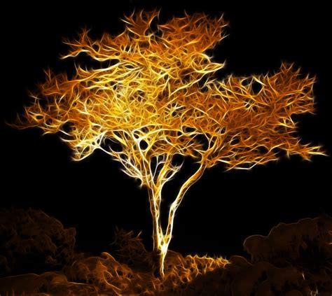 wallpaper trees gold golden tree by megaossa on deviantart