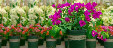 order monrovia plants online