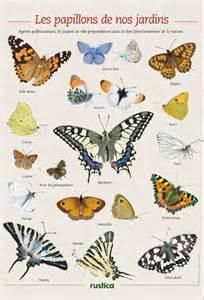 les papillons des jardins de illustrations