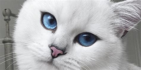 Cat Eye Blue Berkualitas cat with blue and winged eyeliner takes