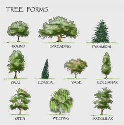 tree types landscaping trees the diagram shows different forms of
