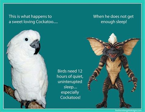 parrots are actually undercover gremlins parrot cage ideas gremlins undercover