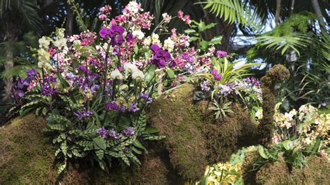 missing nature the nybg orchid show opens this weekend