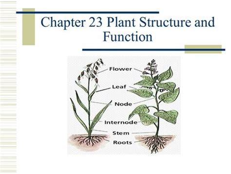 Chapter 23 Plant Structure And Function Worksheet Answers by Transport Food Storage And Gas Exchange In Flowering