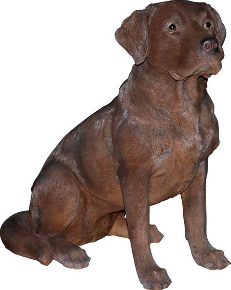 real life chocolate labrador resin garden ornament 163 94 99 garden4less uk shop