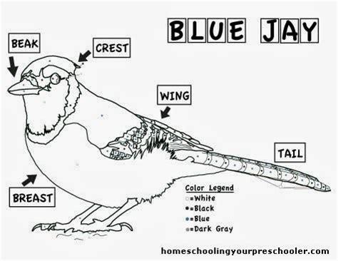 Blue Jay Coloring Sheet Tree Valley Academy Worksheets Audubon