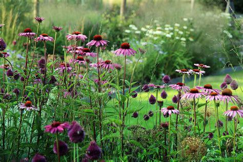 witte border bloemen landelijke tuin met rijk bloeiende border van vaste