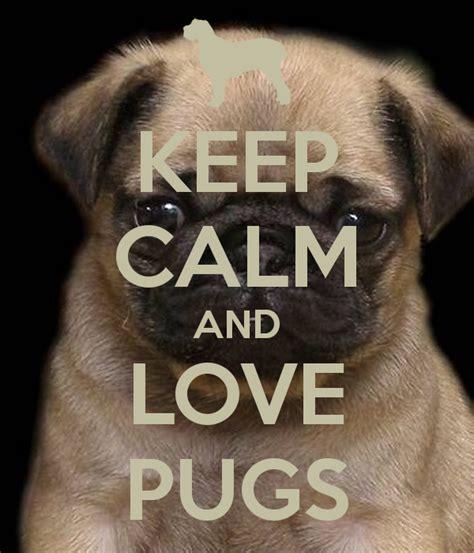 keep calm and pugs keep calm and pugs poster kls3 keep calm o matic