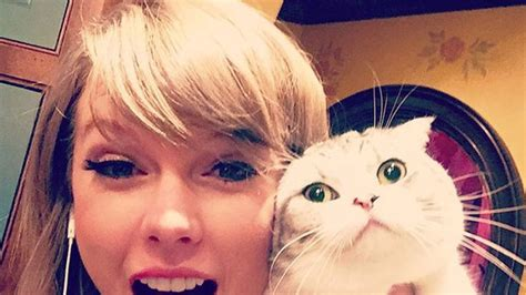 taylor swifts   hilarious     cats