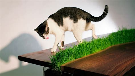 ideas for cat 25 really cool cat furniture design ideas every cat owner
