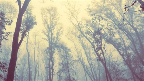 wallpaper tumblr vintage hipster trees forests vintage wallpapers