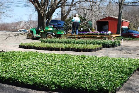 Planters Choice Newtown Ct by Ground Cover Planters Choice