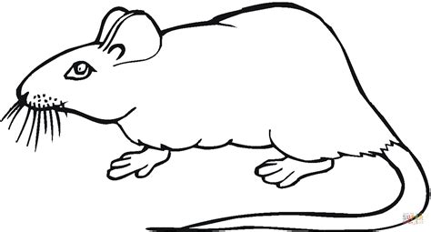 kangaroo rat coloring page rat 19 coloring page free printable coloring pages