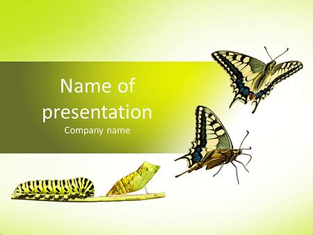 Animated Butterfly Powerpoint Template Bellacoola Co Moving Butterfly For Powerpoint