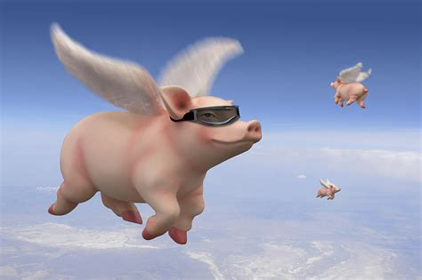 Pig Decor For Home Pigs Fly Photograph By Mike Mcglothlen
