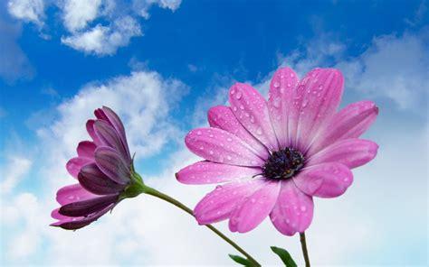 imagenes flores moradas impactantes im 225 genes macro taringa