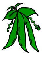 String Bean Clip - bean plant clipart clipart panda free clipart images