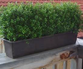 potted plants patio privacy triyae inexpensive ideas for backyard privacy