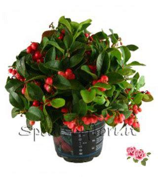 consegna fiori in italia fiori in italia consegna fiori in italia