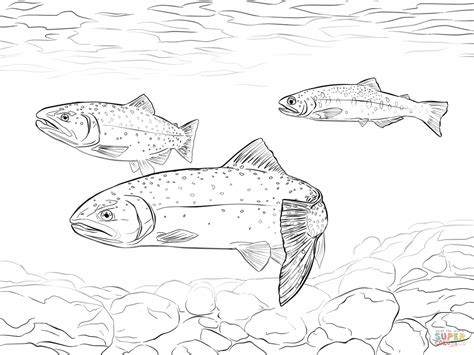 coloring pages rainbow trout cutthroat trout coloring page sketch coloring page