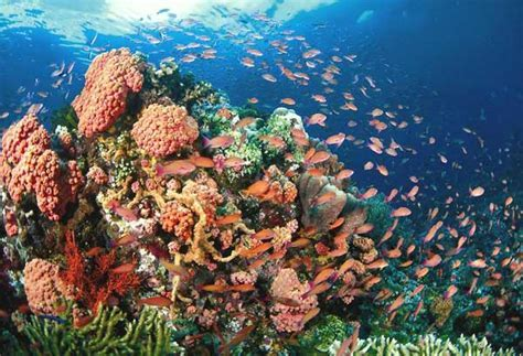 Phl, Australia launch project on coral reefs, mangroves