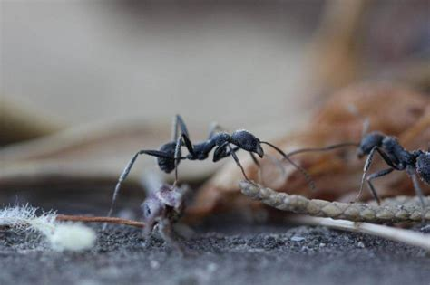 how to get rid of ants in your house how to get rid of ants in your home founterior