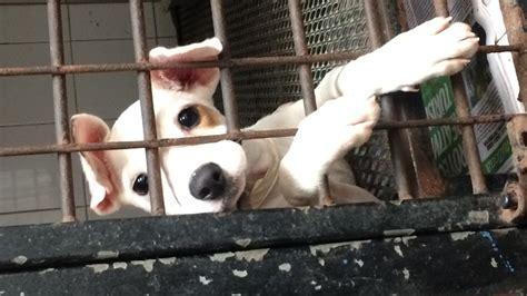 sato project saves pups  dead dog beach cnn
