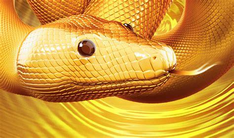 new year snake what does it sydney new year festival 2013 sydney