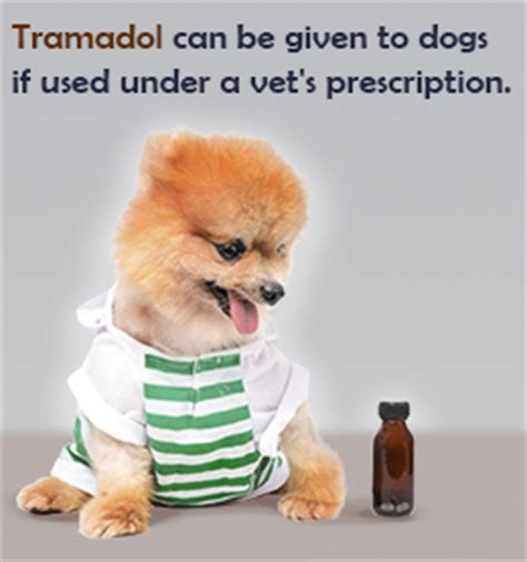 tramadol dosage for dogs health buzzle