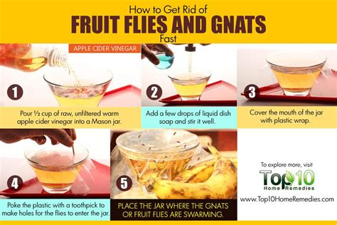 how to get rid of gnats in the house fast how to get rid of fruit flies and gnats fast top 10 home remedies