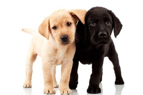 Apartment Living Pets Best Pets For Apartment Living Apartments