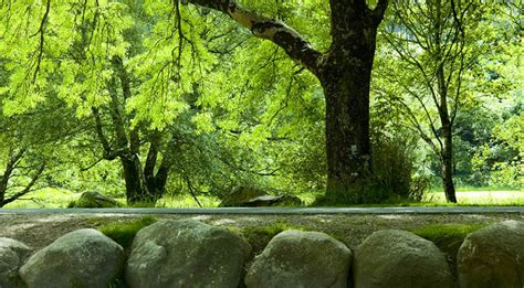 wallpaper ranting daun pohon di tepi sungai santapan rohani