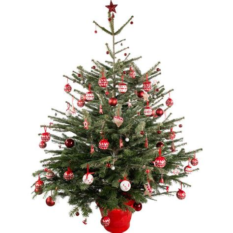 real christmas tree pictures to pin on pinterest pinsdaddy