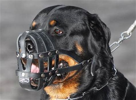 weight rottweiler everyday light weight ventilation rottweiler muzzle product code m41 m41