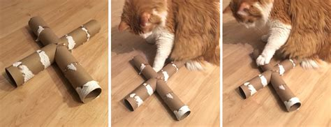 Why Do Cats Roll On The Floor by Diy Cat Feeder Toys How To Make Them And Why They Re So