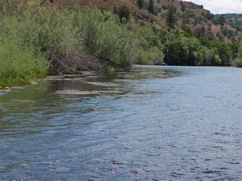 Bureau Fly 926 by Klamath River Fly Fishing Guide Mtshasta
