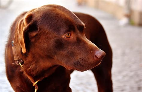 lymes disease symptoms in dogs what are lyme disease symptoms in dogs canna pet 174