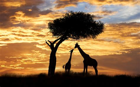 worlds  sunset spots photo gallery rough guides
