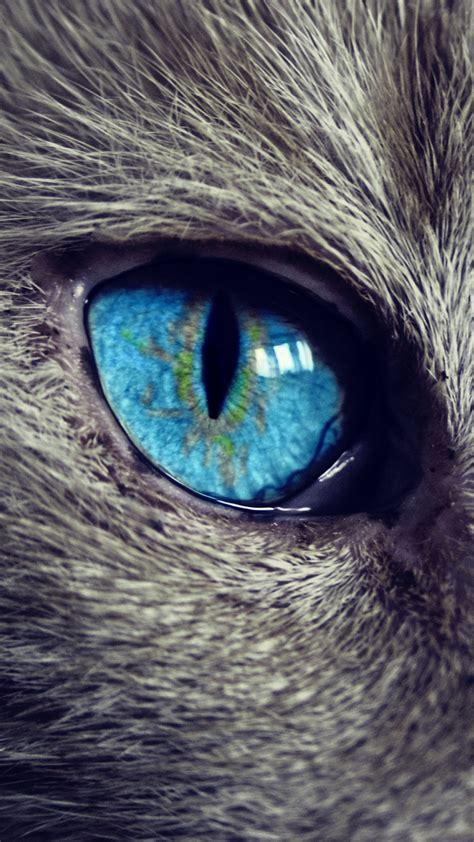 Cat Eye Biru Top cat eye best new samsung galaxy a3 wallpaper