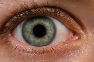 human eye color human eye