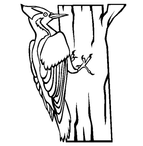 Woodpecker Coloring Page 12 woodpecker coloring pages for print color craft