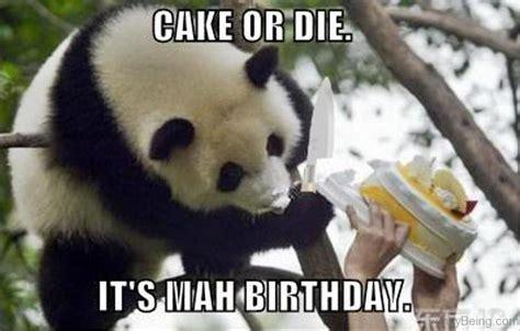 Meme Panda - panda meme 100 images do not continue this demanding