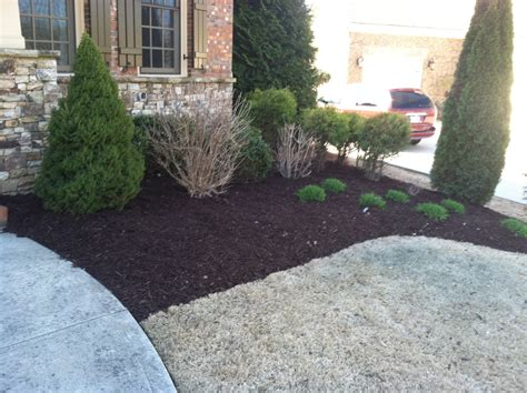 mulch bed small bed mulch before after golden pine straw