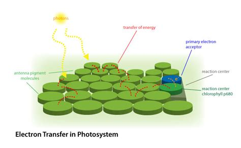 Light Harvesting Complex by Photosynthesis I Biology Visionlearning