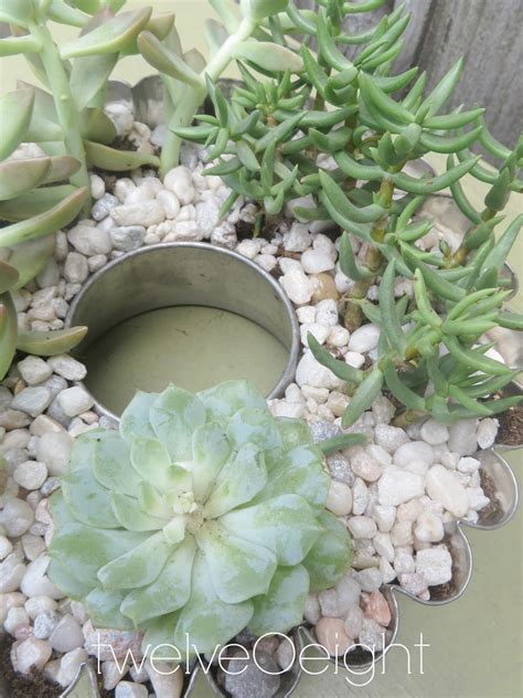 diy succulents diy succulent container garden twelveoeight