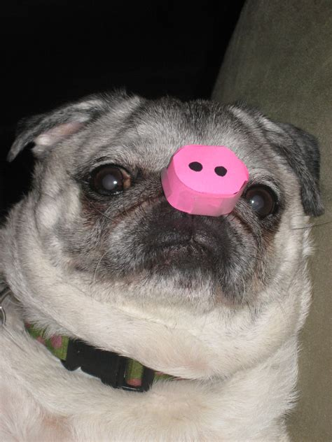 pig pug pin lazy day clothes shoes hair accessories nails tattoos on