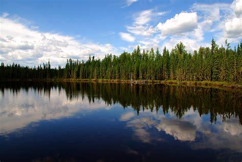 wetlands  utikuma lake northern alberta  flickr